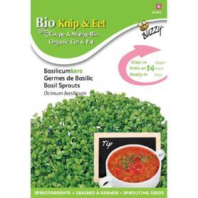 BIO nasiona na kiełki - Bazylia, 20 g