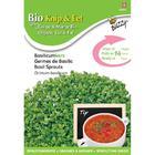 BIO nasiona na kiełki - Bazylia, 20 g (1)