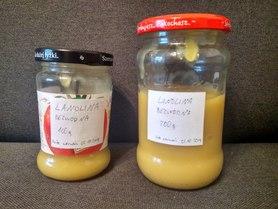 Lanolina bezwodna, opakowanie ZERO WASTE - resztki z beczki, 446,6 g